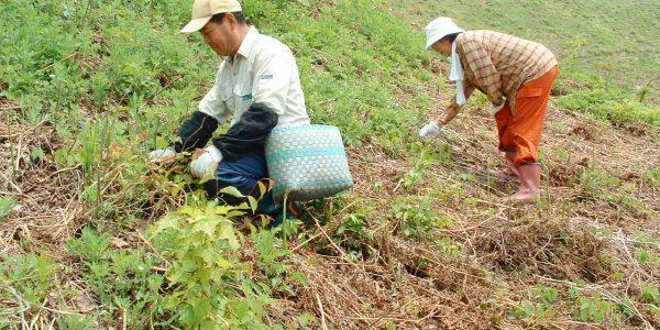 中津川-山菜狩り